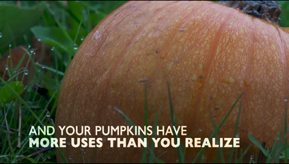Six ways to use your pumpkins after Halloween