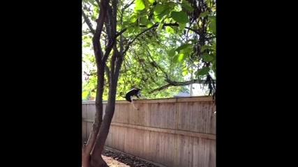Aim high! Dog shows off impressive jumping skills in U.S.