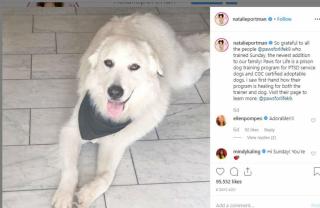 Natalie Portman adopts dog