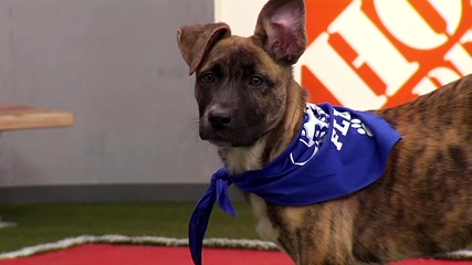 Puppies hit the gridiron for the 16th annual Puppy Bowl