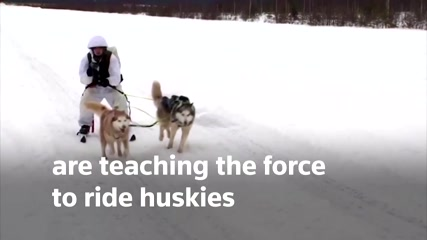 Soldiers, skis and sled dogs: Russian military team up with huskies