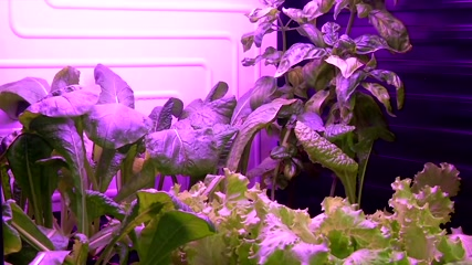 Czech scientists grow food for future Mars missions