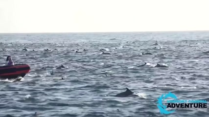 Hundreds of dolphins ride waves off Laguna Beach